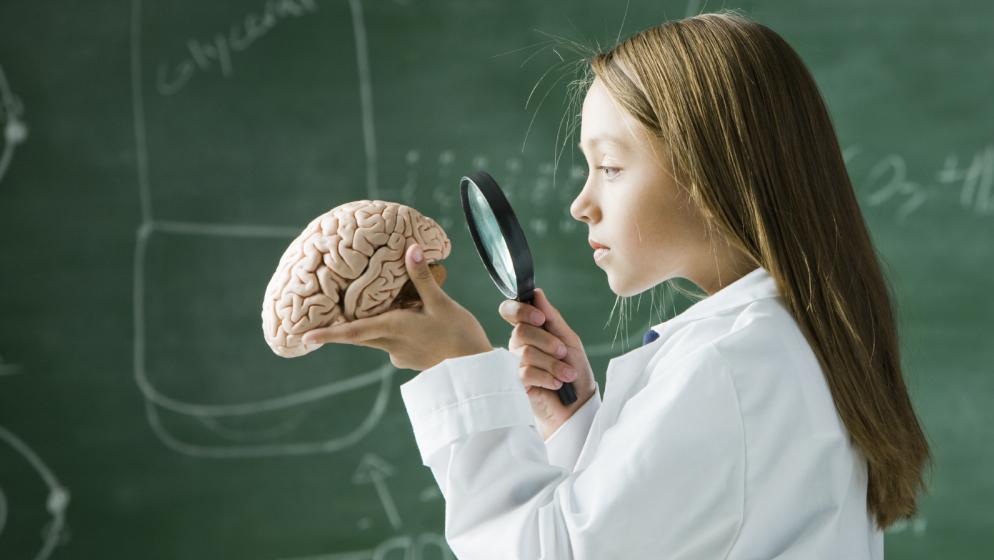 Cómo crece el Cerebro y comprender su codependencia con el Cuerpo
