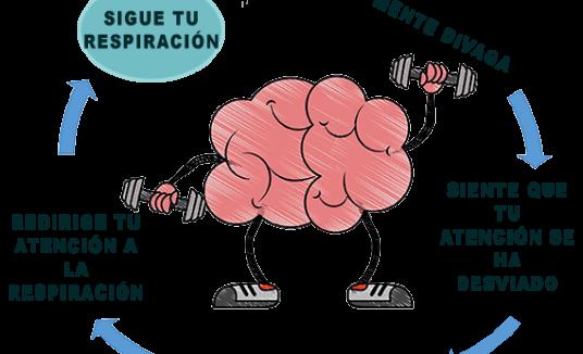 Entrena tu Cerebro, Mejora tu Atención